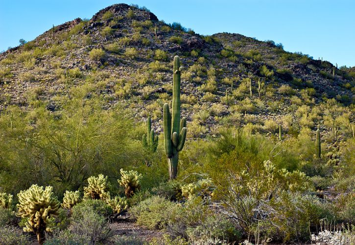 Top 10 Tourist Attractions in Scottsdale, Arizona