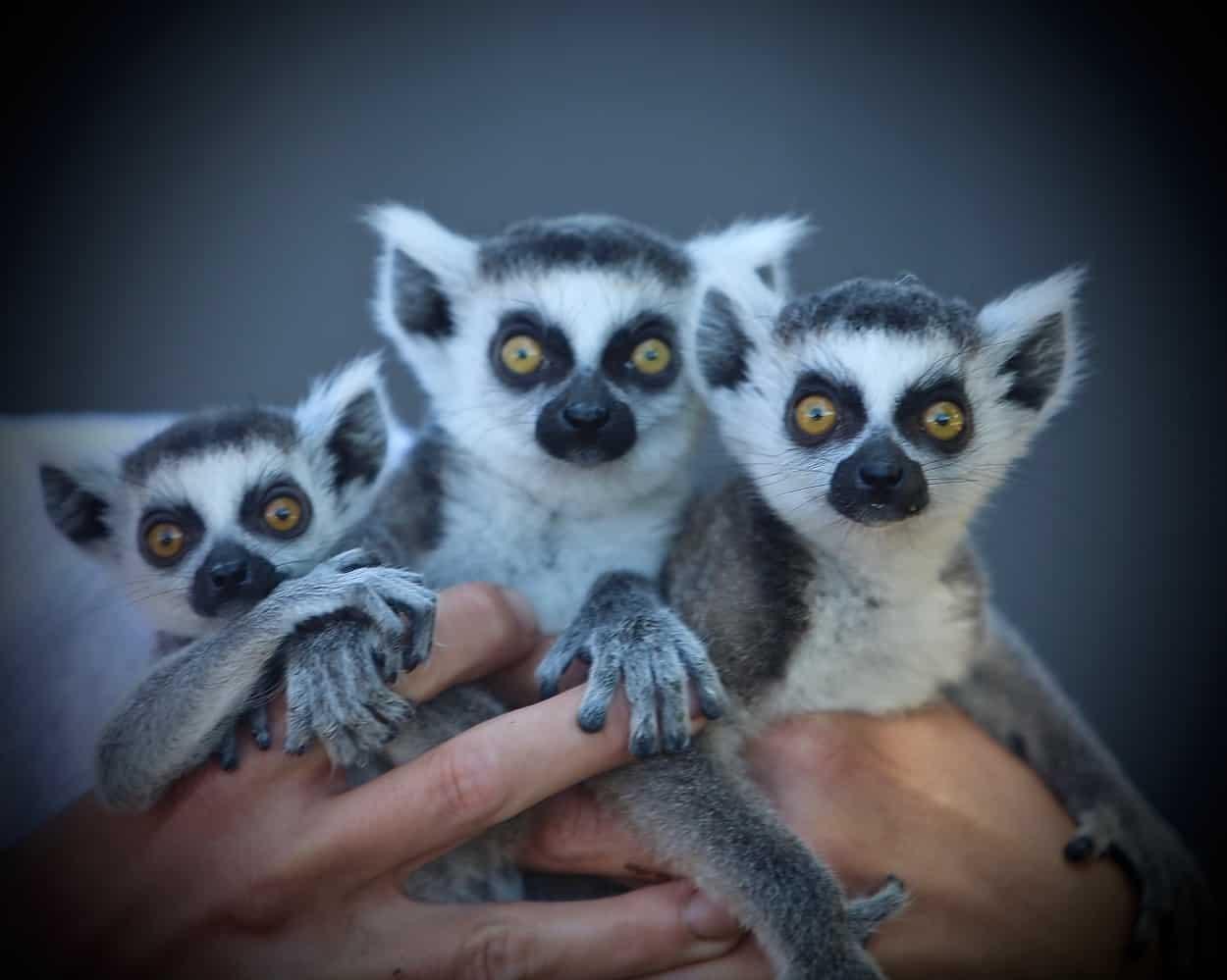 Safari Zoological Park
