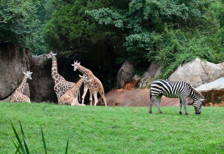 North Carolina Zoo