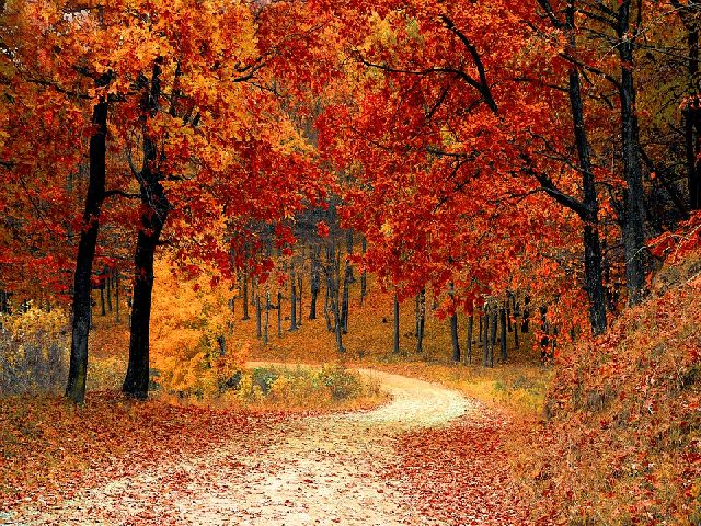 Top 10 Places to See Fall Colors in the USA
