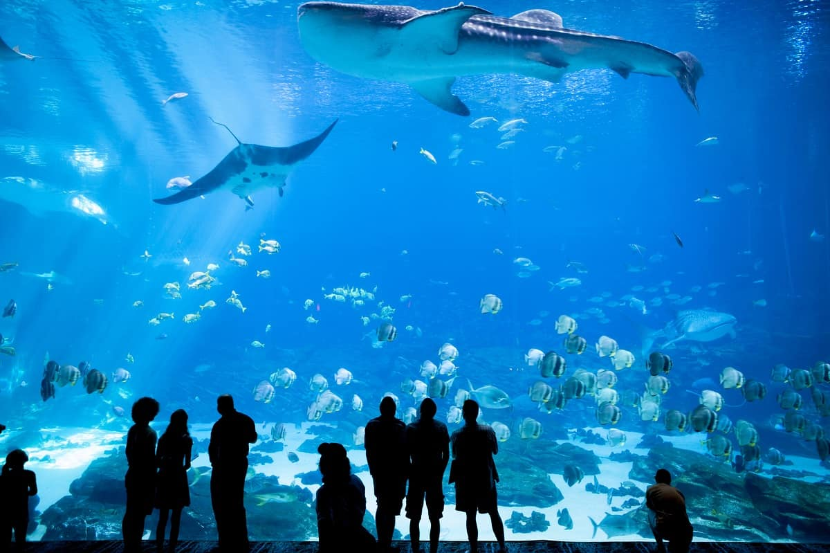 25 Best Aquariums in the US to Visit in 2021