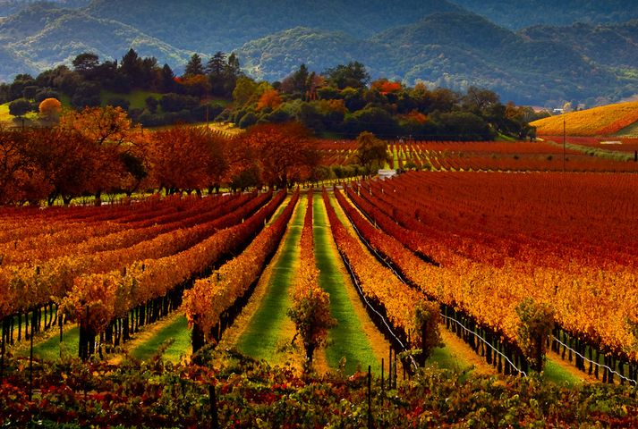 Top 10 Weekend Trips for the Wine Lover