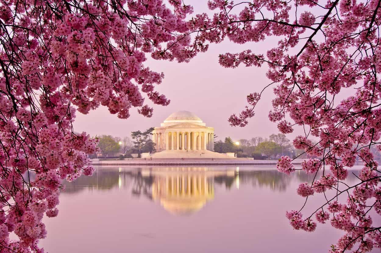 Cherry Blossoms (Tidal Basin, East Potomac Park)